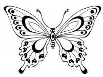 Раскраски бабочки (28)