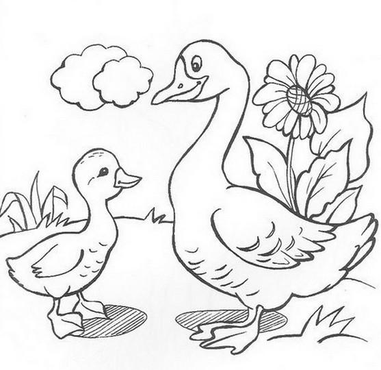 раскраски домашние животные бесплатные картинки для детей