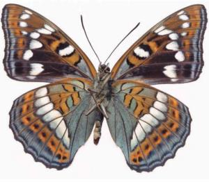 Бабочки из бумаги своими руками (10)