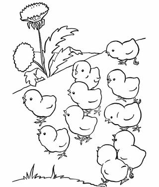 Раскраски птицы (13)