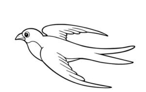 Раскраски птицы (17)