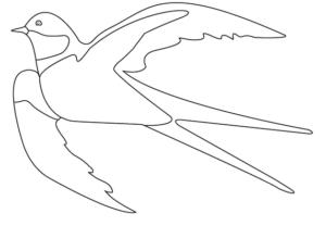 Раскраски птицы (18)