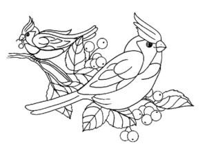 Раскраски птицы (19)
