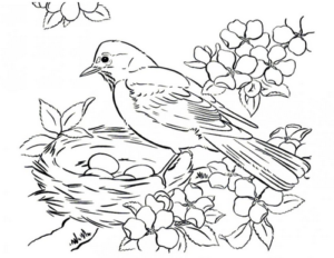 Раскраски птицы (20)