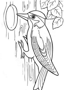 Раскраски птицы (21)
