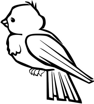 Раскраски птицы (22)