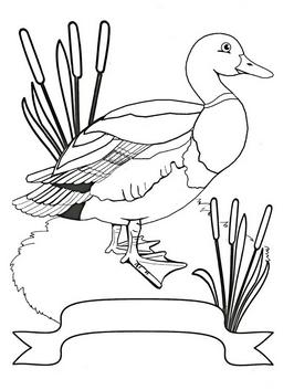 Раскраски птицы (23)