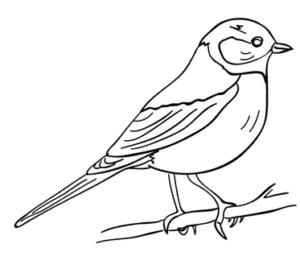 Раскраски птицы (24)
