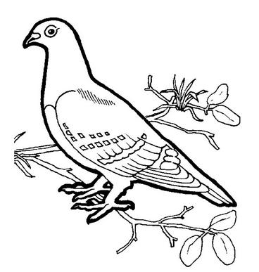 Раскраски птицы (26)