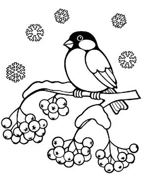 Раскраски птицы (27)