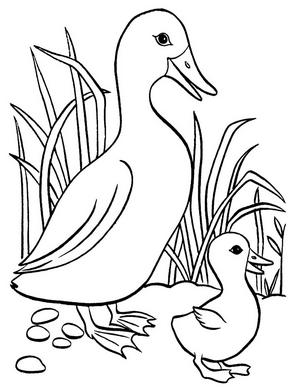 Раскраски птицы (29)