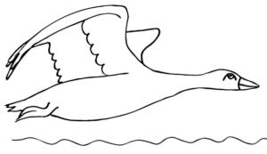 Раскраски птицы (31)