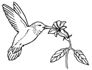 Раскраски птицы (32)