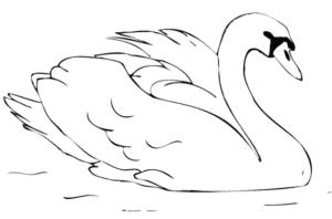 Раскраски птицы (34)