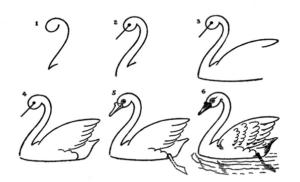 Раскраски птицы (38)