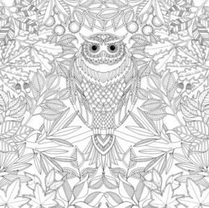Раскраски птицы (5)
