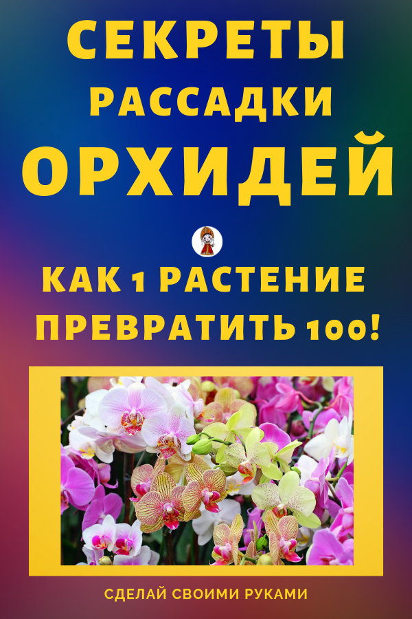 Секреты рассадки орхидеи своими руками: как превратить всего одно растение в сто?