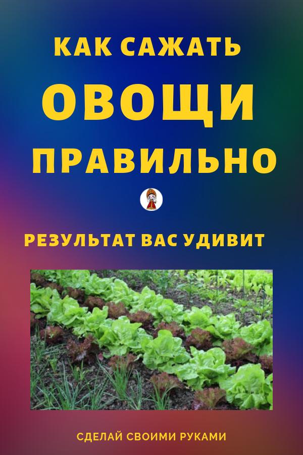 Как сажать овощи по новому своими руками. За много веков выращивания овощей люди заметили, что некоторые овощи хорошо растут вместе, а некоторые, наоборот, мешают росту друг друга. Овощи, зелень и цветы помогают друг другу в росте путем улучшения почвы или отпугивания вредителей друг от друга. Умная посадка обеспечит Вас большим урожаем.