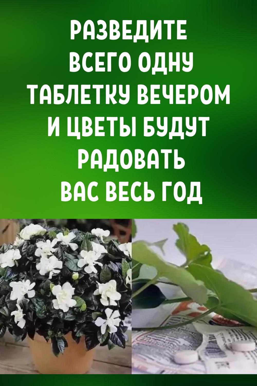 Разведите всего одну таблетку вечером и цветы будут радовать вас весь год!